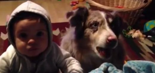 """Viral: quería que su bebé diga """"mamá"""" pero su perro lo hizo primero"""