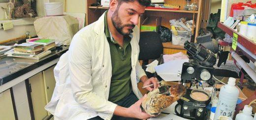 Entre Ríos: buscan crear áreas protegidas para cuidar 395 especies de aves de la zona del Espinal, el Delta del Paraná y el Bajo río Uruguay