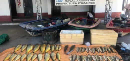 Prefectura incautó dorados, bogas, bagres y surubíes pescados ilegalmente en la zona de Ituzaingó
