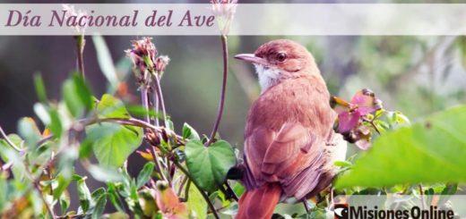 Argentina cuenta con alrededor de 1000 especies de aves: conocé la historia detrás de la efeméride