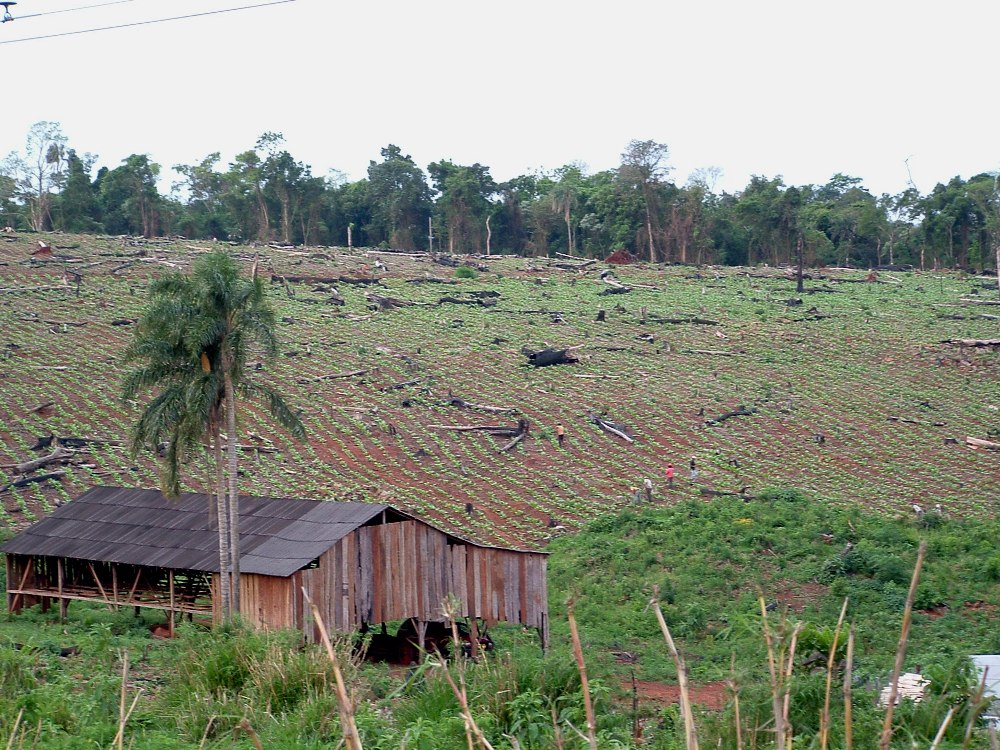 Investigación a escala global coloca a Misiones en el mapa con altos índices de efectividad para inversiones en restauración y regeneración de bosques nativos