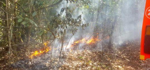 Incendios en Puerto Iguazú: aseguran que los focos están controlados