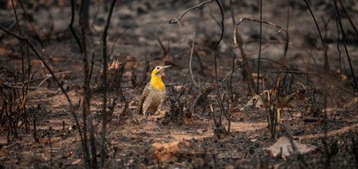 Las últimas lluvias trajeron alivio en Paraguay por los incendios