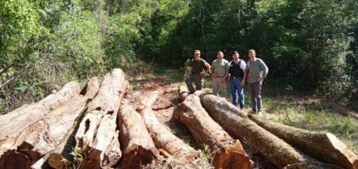 Ecología decomisó maquinarias y madera nativa en Santo Pipó