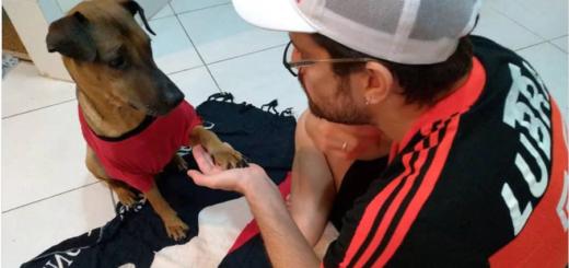 Un hincha puso en venta las entradas de la Copa Libertadores para pagar el tratamiento de su perro enfermo de cáncer