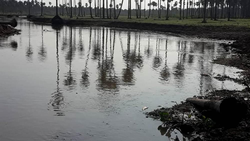 Formosa: impactantes imágenes de mortandad masiva de peces por efectos climáticos en el Bañado La Estrella