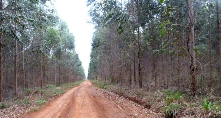 Texto completo Proyecto de Ley Zonas de Protección Ambiental y Limitación para plantaciones forestoindustriales dentro de los ejidos urbanos y cursos de agua de Misiones
