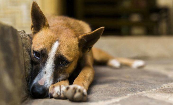 Con un gran corazón: realiza varios emprendimientos para ayudar a los animales que rescata
