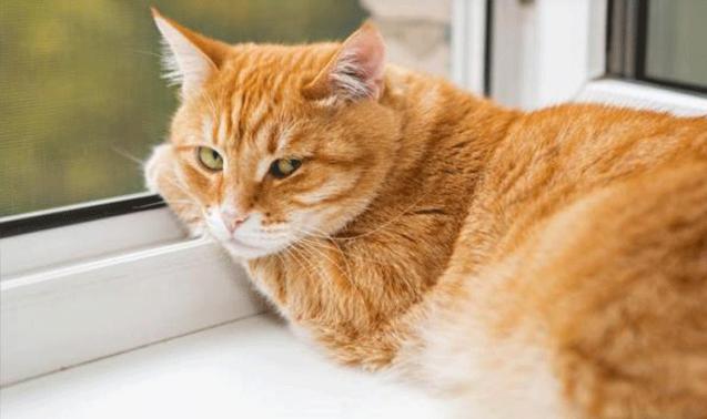 Video: la reacción de un gato mientras su dueño lo baña
