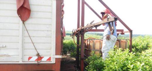 Ecología prohibió el ingreso a Misiones de desechos de establecimientos avícolas