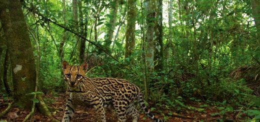 La Selva Misionera es el ambiente con mayor biodiversidad del país y se descubren nuevas especies en forma permanente