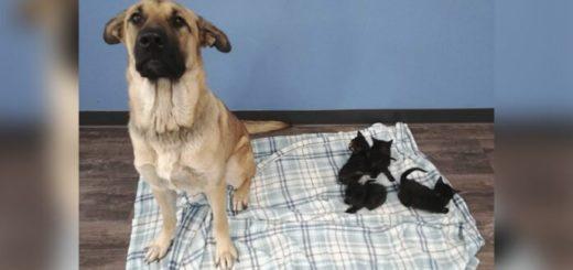Viral: encontraron a una perra cuidando a cinco gatitos en la nieve