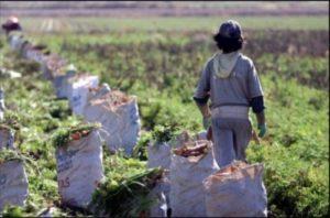 Corrientes: RENATRE denunció condiciones de extrema precariedad y explotación laboral en dos establecimientos forestales en Ituzaingó