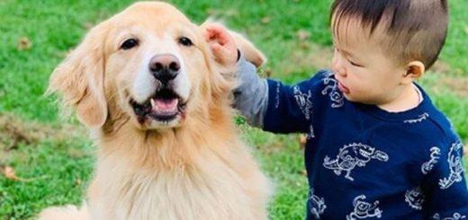 "Un perro ""cuidó"" a un bebé desde que nació y la historia se volvió viral"
