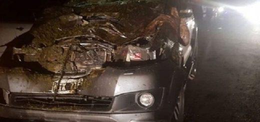 Corrientes: un médico chocó a un caballo suelto en Ruta Provincial 20
