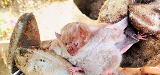 Detectan murciélagos rabiosos a pocos kilómetros de Posadas
