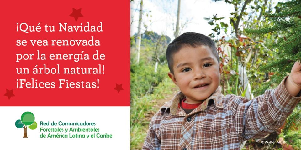 """#NavidadNaturalEnMisiones: """"Un regalo del bosque es un mensaje de conexión con la vida"""""""