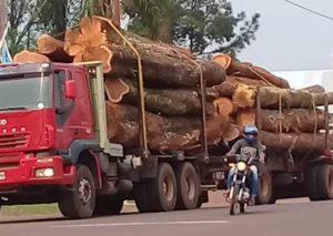 """Juan Domingo Perié: """"Es preocupante el volumen de rollos de madera nativa que se observa se está movilizando en las rutas misioneras"""""""