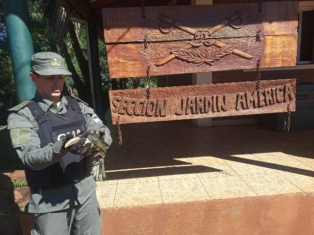 Asisten a un animal silvestre que se encontraba herido en San Ignacio