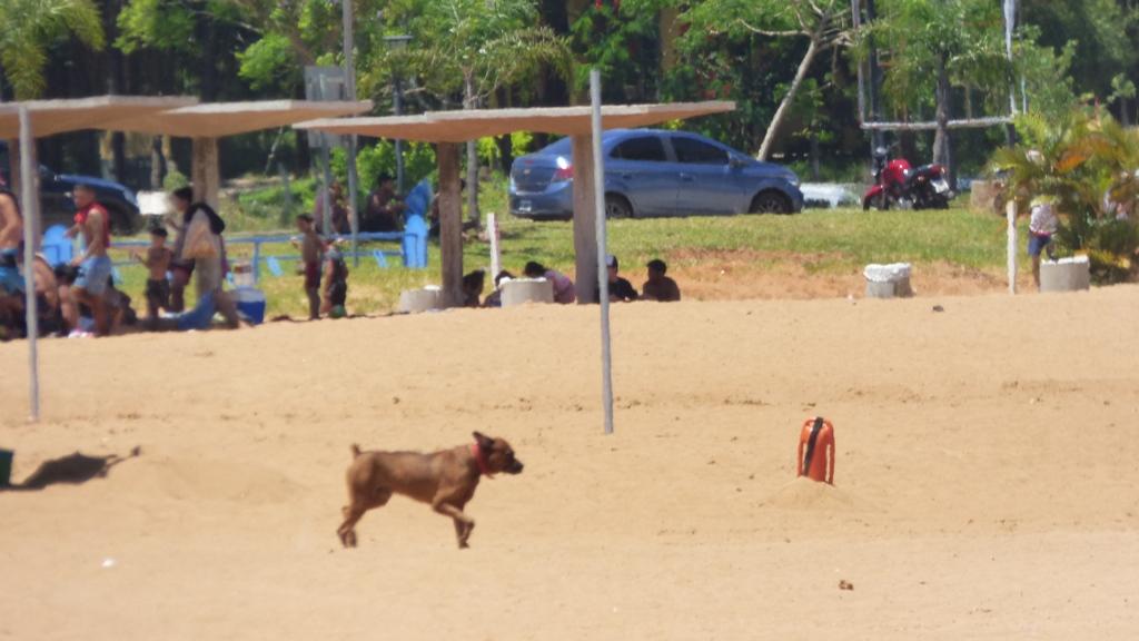 Las playas y piletas de Posadas llenas de personas disfrutando la calurosa tarde de Navidad