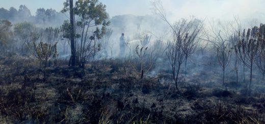 Altas temperaturas causaron un incendio de malezas en el Barrio Jardín Primavera de Apóstoles