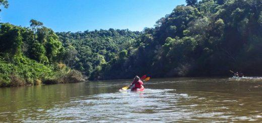 Selva Misionera: los desafíos de la conservación y el ecoturismo en áreas distinguidas como maravillas naturales de la Argentina