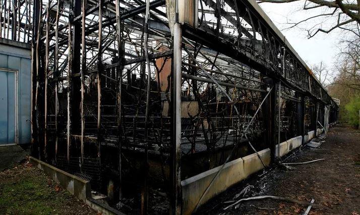 Alemania: más de 30 animales murieron tras un incendio causado por fuegos artificiales en un zoológico