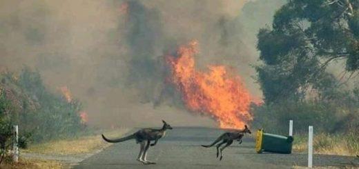 """Australia supera el récord de 55°, más de cinco millones de hectáreas devastadas por el fuego y más de 480 millones de animales quemados: """"Se inició una evacuación masiva en la costa sureste"""""""