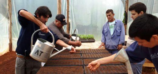 El municipio posadeño brindará un curso para creación de huertas y arreglo floral