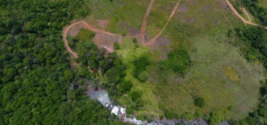 San Vicente: deforestan y llegan hasta un arroyo sin respetar la cobertura de bosques que exige la ley de protección de los recursos hídricos