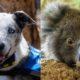 Maltrato animal: abandonó a su perra en una alcantarilla y le pegó los ojos para que no lo siguiera