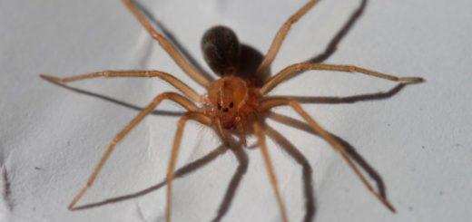 """Nena de 3 años internada en grave estado por la picadura de la """"araña de rincón"""""""