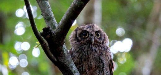 Derribando mitos: las lechuzas cumplen un rol fundamental en la naturaleza y son de las aves más hábiles para desplazarse en la oscuridad