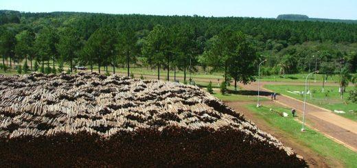 Cuál es el rol de la producción forestal, la pasta celúlosica y papel en la época del COVID-19