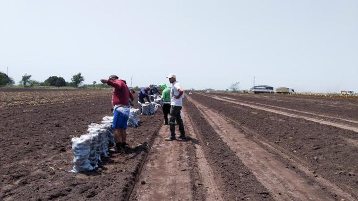 """Durante el 2019 el 83% de los trabajadores del campo se encontraban """"en negro"""" según un relevamiento del RENATRE"""