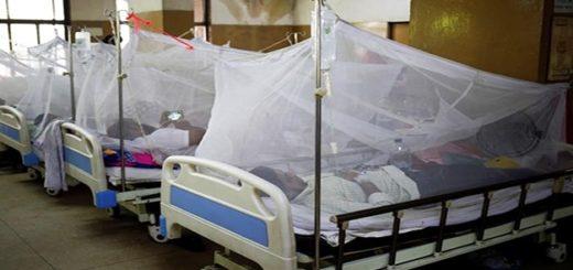 """Hay 14 posibles muertes por dengue en Paraguay y advierten sobre una """"mutación"""" que hace al mosquito más resistente"""