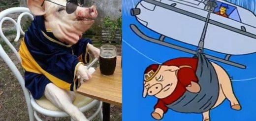 Estallaron los memes del cerdo arrojado desde un helicóptero en Punta del Este