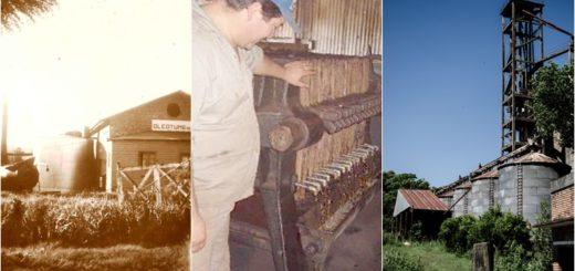 """Recuerdos de """"La era del Tung"""" en Misiones: el prometedor cultivo del siglo pasado que terminó en abandono"""