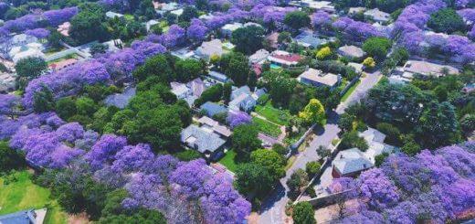 """Acción climática y ciudades sostenibles: """"Más árboles, menos aire acondicionado"""""""