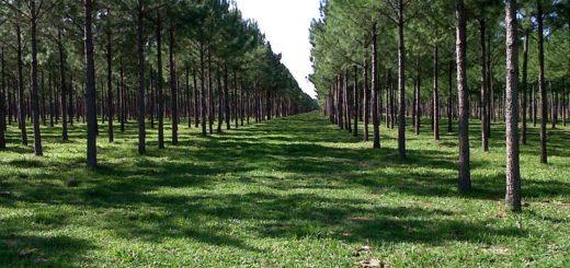 Seguro Verde: Corrientes cerró el 2019 con una cifra récord de pagos por $224 millones en aportes no reintegrables para forestación