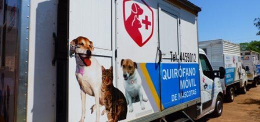 Ante los fallecimientos de mascotas, la Municipalidad abrió una investigación en el IMUSA