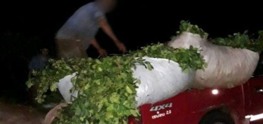 Productores en alerta por robos de yerba mate advierten que defenderán sus yerbales de los intrusos