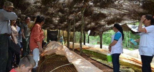 Talleres REDD+ en El Soberbio: la conservación de la Selva Misionera como una solución de adaptación ante el Cambio Climático