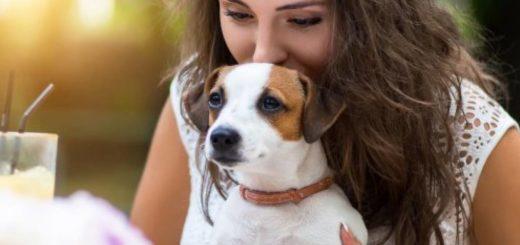 """""""Compañeros"""": así quieren desde una organización que llamemos a nuestros animales, ya que consideran que """"mascotas"""" resulta ofensivo"""