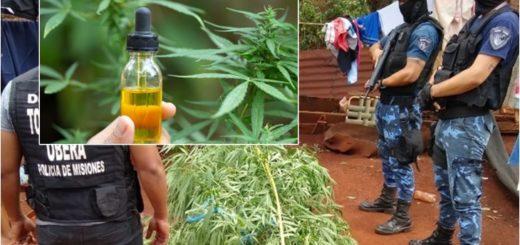 Abuela detenida por cultivar marihuana en Campo Viera: afirman que urge reglamentar la ley de cannabis medicinal