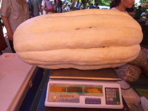 Feria Franca Posadas: un productor de Panambí cosechó un zapallo de más de 27 kilos