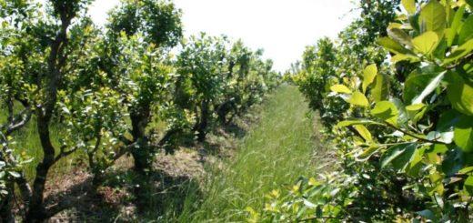 San Pedro: denuncian el robo de media tonelada de yerba mate