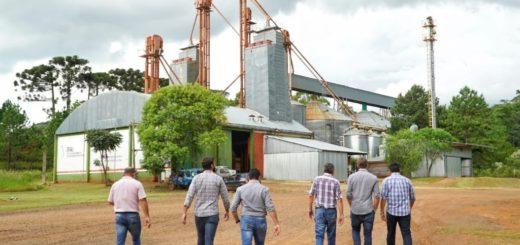 Reactivarán los silos de Bernardo de Irigoyen para producir alimentos balanceados derivados del maíz