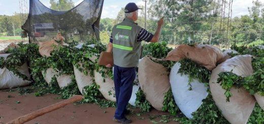 Robo de yerba mate: el INYM continúa con los operativos para controlar el transporte y acopio de hoja verde