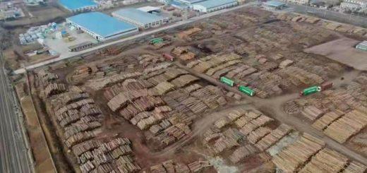 China enfrenta un fuerte impacto en el mercado de la madera: se restringen los envíos de 2020 en toda la cadena global de suministro